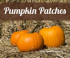 Local Pumpkin Patches Pumpkin Patches Muscogee Moms