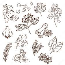 kitchen herbs set of herbs and spices natural spices compilation of vector