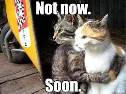 Soon Cat Meme - soon not now restraining cat quickmeme