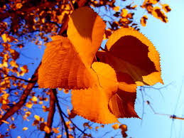 autumn leafs wallpaper autumn nature wallpapers in jpg format for