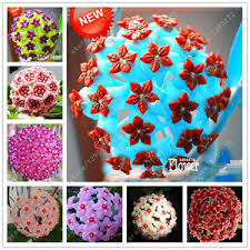 potted flowers hoya seeds potted flowers bonsai plants hoya seed orchid seed