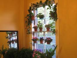 steps to a window garden set the glass shelves on their supports i used 1 2 inch thick shelves which were acquired from a glass cutting shop they were acquired for a song too