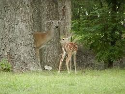 i found a baby deer bird etc what should i do wild wonderings