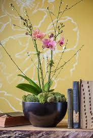 How To Revive Flowers In A Vase How To Style An Orchid Plant Lia Griffith
