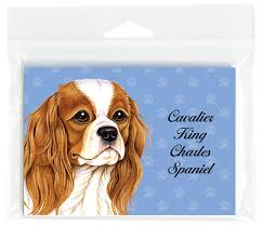 cavalier king charles note cards set of 8 with envelopes