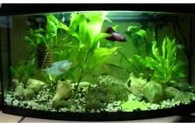 Best Decorations Best Aquarium Decorations Youtube