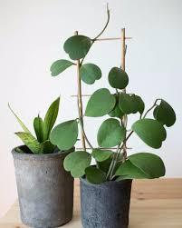 heart succulents popsugar home