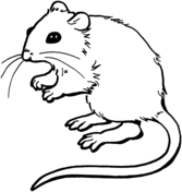 Coloring Page Of A Mouse mice coloring pages free coloring pages