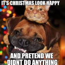 Christmas Dog Meme - dogs an cats imgflip
