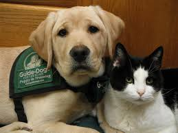 Training A Guide Dog For The Blind 10 Best Guide Dogs For The Blind Images On Pinterest Blind