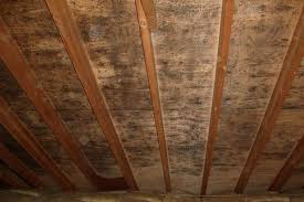 White Mold In Basement Dangerous by Surviving Mold In Your Attic How To Kill Attic Mold