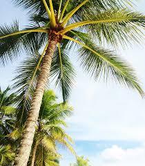 free photo palm tree miami free image on