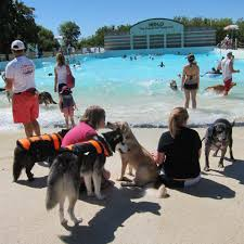 dog about town summer u0027s last splash and more things to do pets