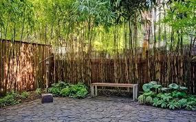 Bamboo Garden Design Ideas Bamboo Landscape Ideas Lawn Outdoor Patio In Backyard With Bamboo