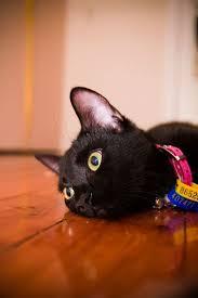 target animal crossing 15 black friday best 25 black cat appreciation day ideas on pinterest black