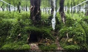 Aquascape Aquascapes The Art Of Creating Delicate Underwater Gardens Mnn