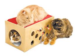 the best toys for cats
