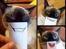 Smiling Cat Meme - i can has cheezburger smile funny animals online cheezburger