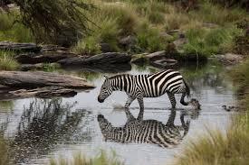 african safari animals the ultimate guide to an east african safari rhino africa blog