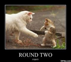 Cat Fight Meme - fight viral viral videos