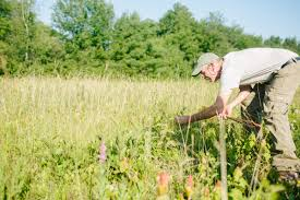 native new england plants in search of rare plants cooperative extension