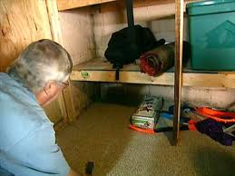 common types of mold in homes hgtv