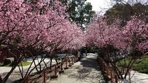 Auburn Botanical Garden Auburn Botanic Gardens National Trust