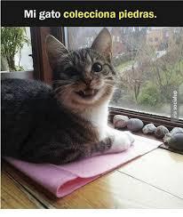 Gato Meme - coolest 22 gato meme wallpaper site wallpaper site