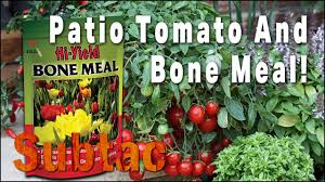 Patio Vegetables by Patio Tomato And Bone Meal Gardening Youtube