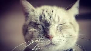 Cuddle Buddy Meme - put me like 盞 yesterday i had to say goodbye to my writing partner