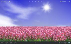 tulip field free android apps on google play