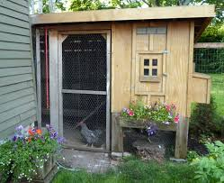 mites when backyard chickens are not so fun bad i n k adink