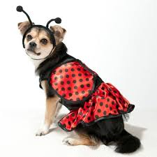 Dog Halloween Costumes 15 Happy Howloween Images Dog Toys Ropes