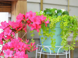 Diy Container Garden 3 Steps To The Perfect Container Garden Domicile 37