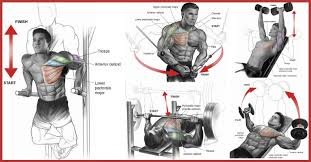 Reverse Grip Bench Press Upper Chest Perfect 7 Techniques To Build The Upper Chest Gym Guider