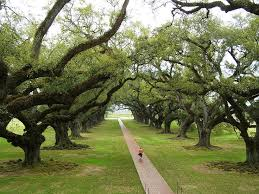 Louisiana work and travel images 189 best forest parks images public domain trees jpg