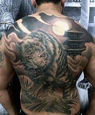 best 25 ideas about japanese tiger find what you ll