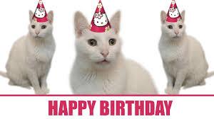 Happy Birthday Cat Memes - happy birthday from the cats youtube