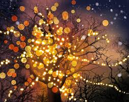 lighted trees by coyotehills on deviantart