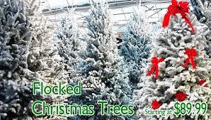 flocked live trees