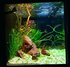 membuat aquascape bening aquascape substrate a journal by tony the green machine appartment