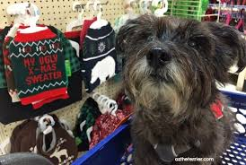 petsmart black friday deals 13 unexpected places to find unbeatable black friday deals the