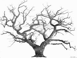tree drawing with roots oak tree drawing ideas on