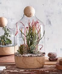 best 25 large terrarium ideas on pinterest water terrarium