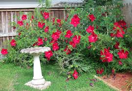 texas tough summer bloomers u2014 living expression landscapes