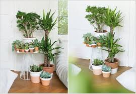 indoor plans 18 functional ideas how to display your indoor plants