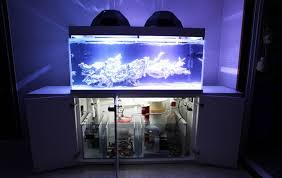 Aquascape Reef Sick Looking Tank Aquascape Manhattan Reefs
