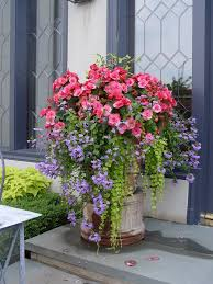 Summer Container Garden Ideas 558 Best Containers Summer Ideas From The Barn Nursery