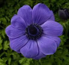 new 2016 perennial introductions for zone 6 and up greenhouse grower