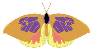 cartoon butterfly free stock photo public domain pictures